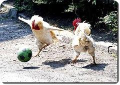 todos_adoram_futebol_ate_as_galinhas