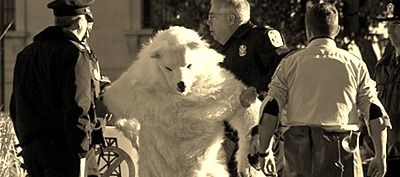 POLAR BEAR ARRESTED AT INTERIOR DEPARTMENT IN WASHINGTON