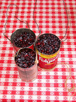At the family cabin in the Blue Mountains we often pick huckleberries. Our family can haul in several gallons on a good day. They are like blueberries but smaller and much more pungent. Fresh huckleberries with brown sugar and cream is without question my favorite dish.