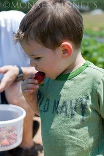 Scott tasting berry blog