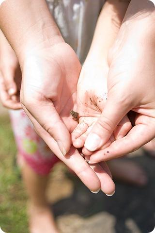 frog in hands blog