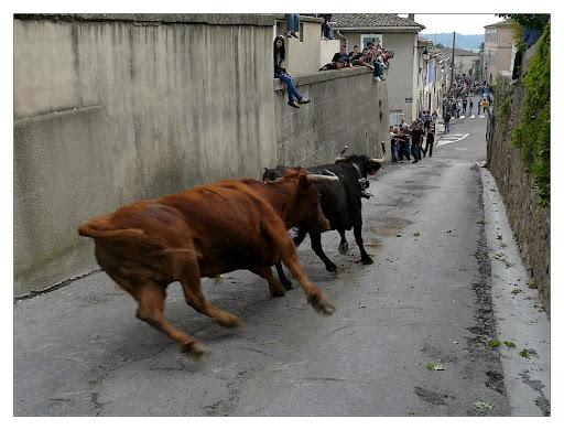 """bous al carrer"" P1190993"