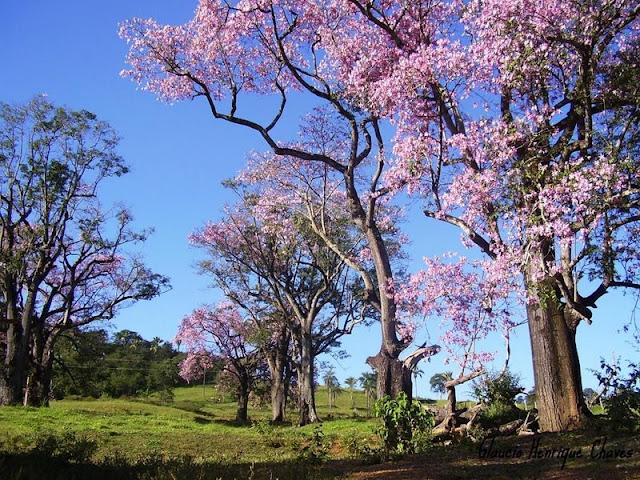 Araguari, a bela do Triângulo Mineiro My471