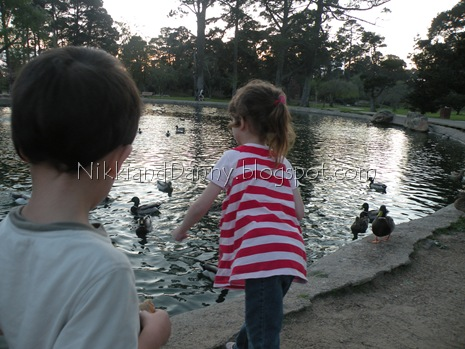 Gabbers feeding ducks