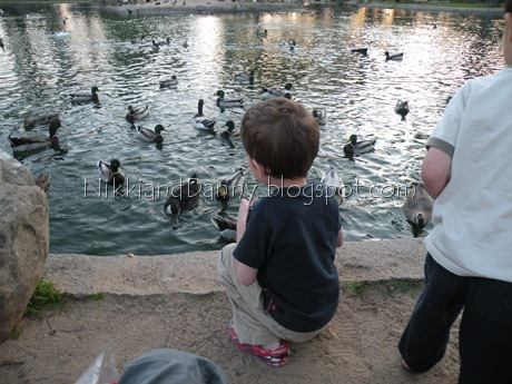 Pookie feeding ducks