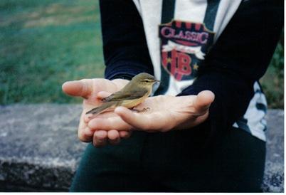 jak holding a garden bird
