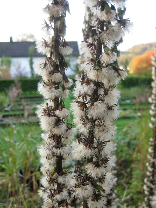 2008-10-19 I hagen (3)