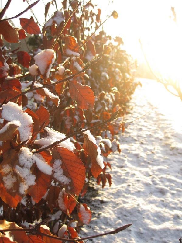 2008-12-31 Hagen på Møll (2)