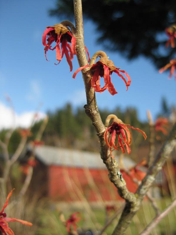 2009-03-08 Hagen i mars (11)