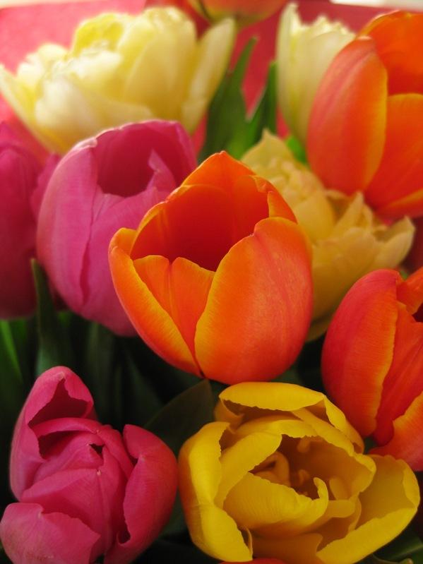 2009-03-11 Blomster i leiligheten (34)