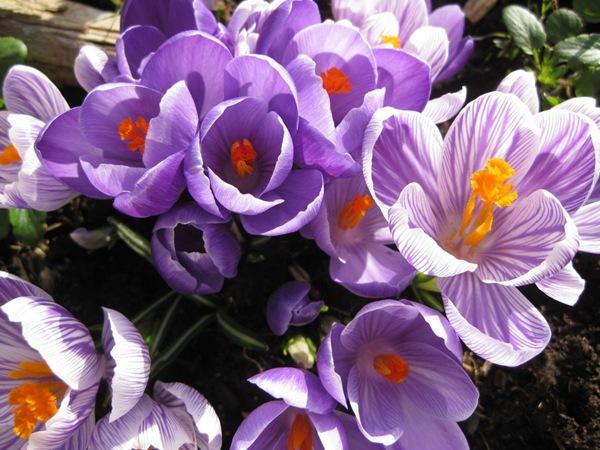 2009-03-17 Verandakassa (12)