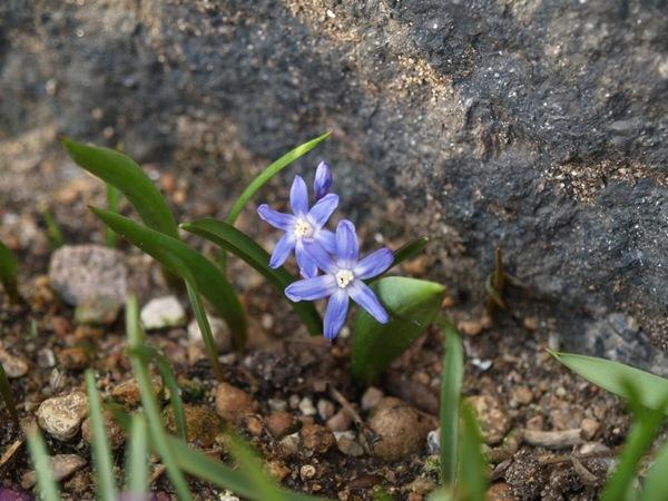 2009-03-21 Mars (219)