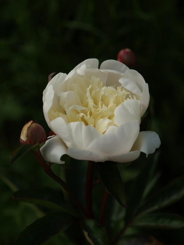 2009-06-07 (46)