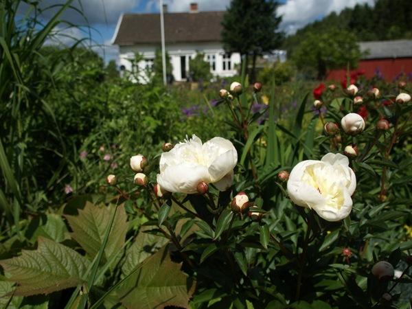 2009-06-18 Hagen (66)