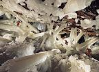http://lh6.ggpht.com/_Wbrv4TZOFic/SZCV8I09FgI/AAAAAAAAAx0/ICgkzjeikgs/s144/Cueva%20de%20los%20Cristales25.jpg