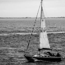 Fluid by Ronan Hearne - Transportation Boats ( sea scape, winter, black and white, fall, boat, landscape )