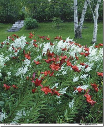 whiteastilberedlily