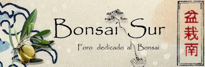 """Diseño del logo """"bonsaisur"""" - Página 2 Bonsaisur4"""