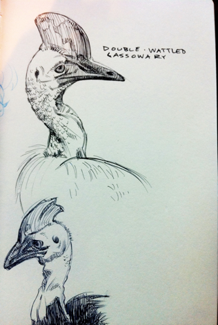 Cassowary sketches