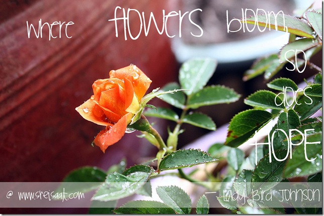 roses_and_hope