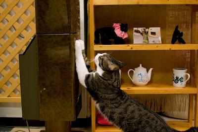 猫カフェ ねこのみせ