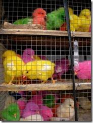 fluoro_birds[1]