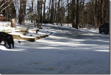 Snow Jan 2010 017