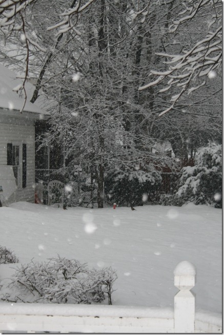 Feb 2011 093