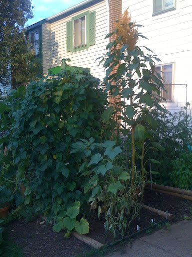 Trellis on more than one side Photo%201-789171