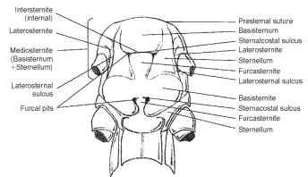 tmp1006_thumb_thumb?imgmax=800 anatomy head, thorax, abdomen, and genitalia (insects)