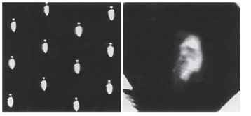 Left: Apposition-type inverted images photographed behind the cleaned cornea of a robber fly (Asilidae). Right: Photograph of an influential 19th century naturalist, taken through the superposition optics of the cleaned cornea of a firefly (Photuris sp.).
