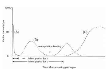 Vector transmission efficiency changes over time after acquisition. (A) Non-persistent transmission. (B) Persistent transmission. (C) Persistent transmission (over weeks), circulative or propagative transmission. The latent periods for (B) and (C) are indicated.