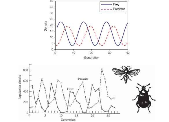 (A) Predator-prey oscillation as predicted by a Lotka-Volterra model and (B) Host-parasitoid oscillation of the Azuki bean weevil in laboratory culture.