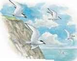 About tern