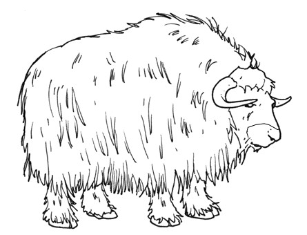 Buffalo, free coloring pages