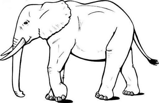 Elefante para colorear