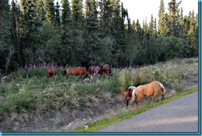 Horses next to Cassier Hwy