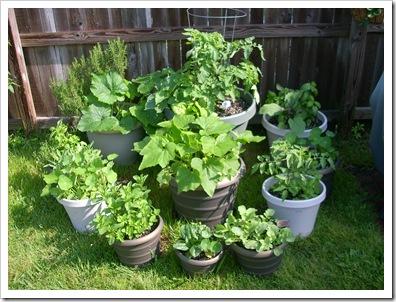 garden 001