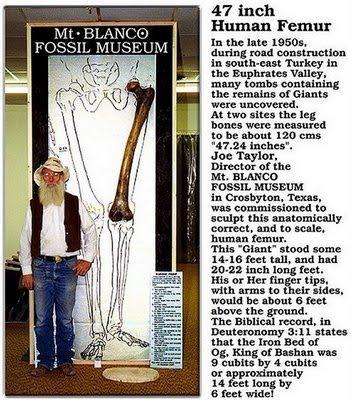 fosil-raksasa-3