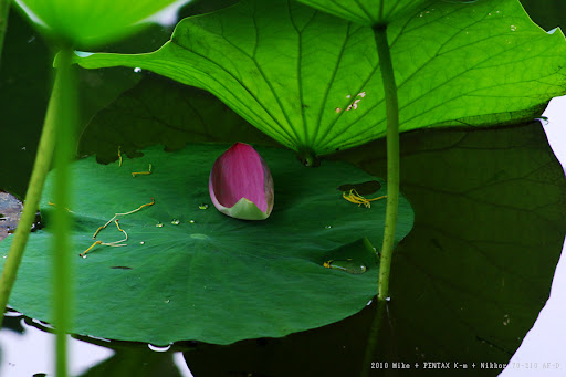中午的植物園加Nikkor鏡測試照