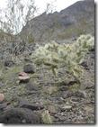 Arizona_2010 031