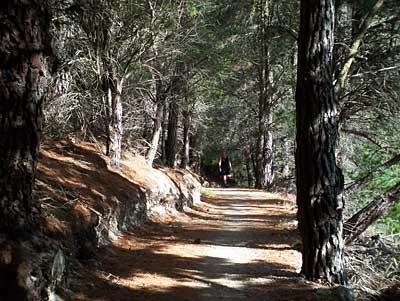 hawea-trees-1.jpg