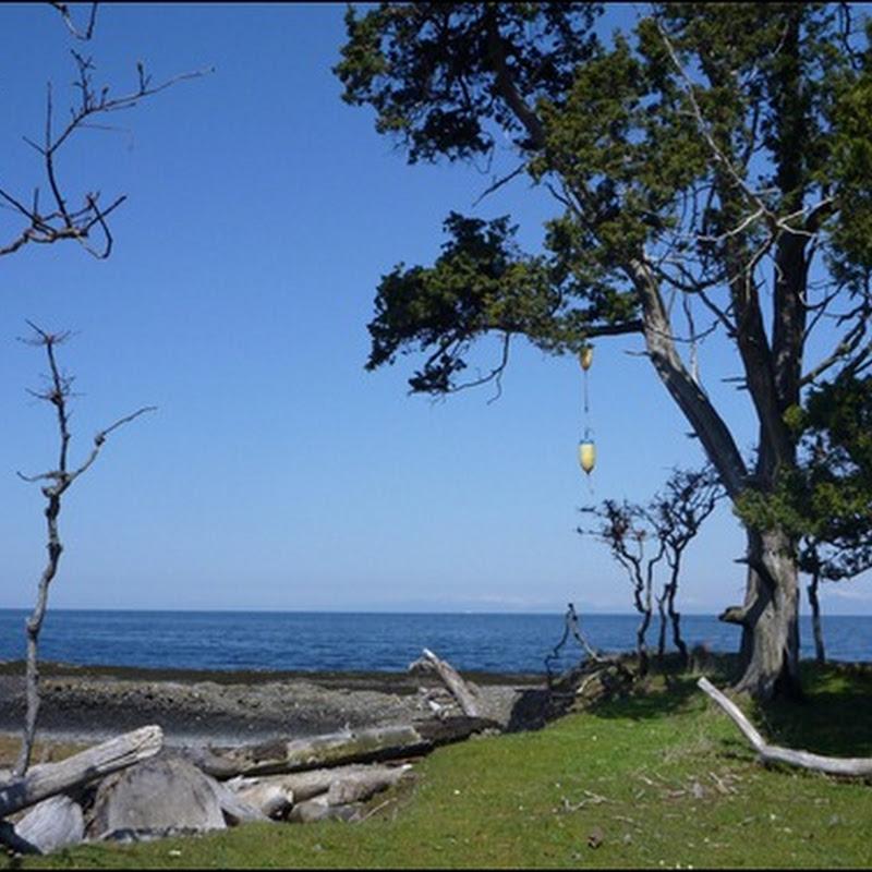 Logbook: Between Tumbo & Cabbage Islands