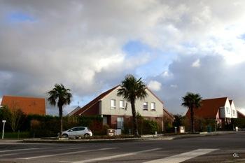 palmiers 363