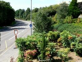 jardin abaye P1010066