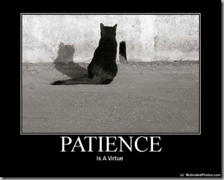 Patience - cat