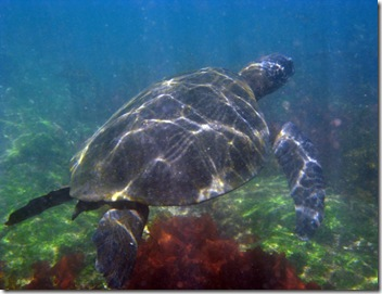Isabela Snorkeling6 [800x600]