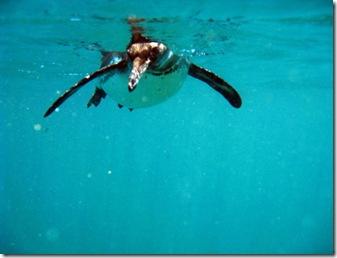 Isabela Snorkeling47 [800x600]