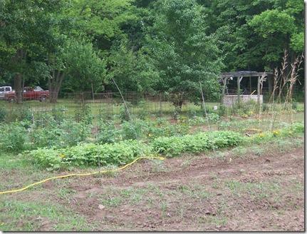 more garden may 003