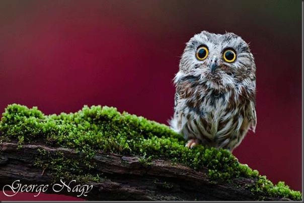 Excelentes fotografias de Animais (2)